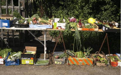 Syston allotment openday produce on table.